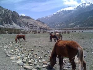 Annapurna-Mandala-Trail 1329